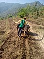 Farm to plough cultivator (खेत जोत्दै किसान ).jpg