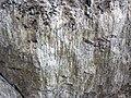 Fault slickenlines (Morrison Formation, Upper Jurassic; Carnegie Quarry, Dinosaur National Monument, Utah, USA) 16 (48862117666).jpg