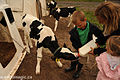 Feeding calves in Ontario.jpg
