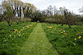 Feeringbury Manor grass path and tulips, Feering Essex England.jpg