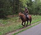Female equistrian on the Vennbahnweg in Raeren, Belgium (DSCF5870).jpg