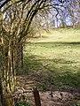 Field Edge - geograph.org.uk - 1225613.jpg