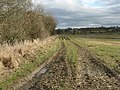 Field alongside the Haugh Burn - geograph.org.uk - 1749368.jpg