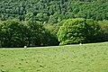 Field east of the Afon Tywi - geograph.org.uk - 800401.jpg