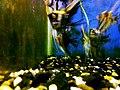 Fish Aquarium - 8.jpg
