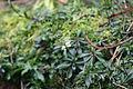 Flickr - brewbooks - Our winter garden.jpg