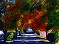 Flickr - paul bica - nature's painting.jpg