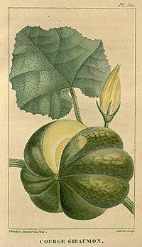 Flore médicale des Antilles, ou, Traité des plantes usuelles (Pl. 322) (7795687438).jpg