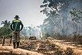 Floresta Nacional do Jamanxim, Pará (23990861957).jpg