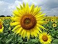 Flower-204161 960 720.jpg