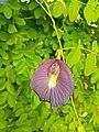 Flower.12.jpg