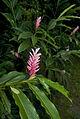 Flower (6791394252).jpg