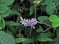 Flower 9814.jpg