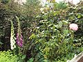 Flowers, Birkenhead - DSC09885.JPG