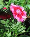 Flowers (81).JPG