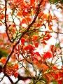 Flowers delhi.jpg