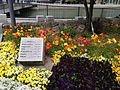 Flowers in Nishi-Nakasu Park.JPG