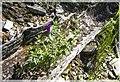 Flowers inside the tree - panoramio.jpg