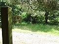 Footpath Sign - geograph.org.uk - 508984.jpg