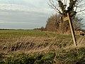 Footpath to Holbrook Wood - geograph.org.uk - 367825.jpg