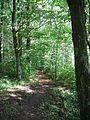 Forêt Chartreuse du Mont Dieu Ardennes France.jpg