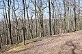 Forêt Départementale de Beauplan à Saint-Rémy-lès-Chevreuse le 14 mars 2018 - 15.jpg