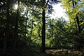 Forêt de Stambruges 14.jpg