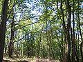 Forêt de la Coubre 028.jpg