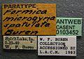 Formica spatulata casent0103452 label 1.jpg