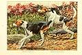 Foxhounds.jpg