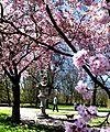 Frühling im Bad Mergentheimer Kurpark. 04.jpg