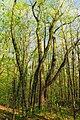 Frank Gantz Trail (3) (26963275951).jpg