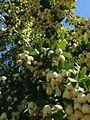 Fruite tree.jpg