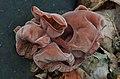 Fungus auricularia (11776915903).jpg
