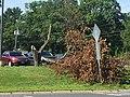 GFLD MA Fallen tree.jpg