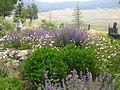 Garden at Vietnam Memorial State Park IMG 0449.JPG