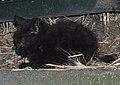 Gato callejero en Madrid 11.jpg