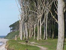 Steilküste am Gespensterwald