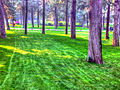 Gfp-beijing-beihai-woods-and-grass.jpg