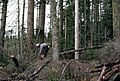 Gifford Pinchot National Forest, timber harvest operations-4 (37001810682).jpg
