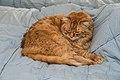 Gillie on the new bedspread (8416750567).jpg