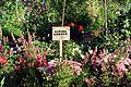 Giving Garden (16750567936).jpg