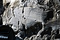 Glacial striations from Pleistocene glaciation on dolostone (Dunham Dolomite, Lower Cambrian; Route 2 roadcut, southeast of the Lamoille River bridge, Vermont, USA) 15.jpg