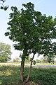 Gorgonzola - Parco Agricolo Sud Milano 16.jpg