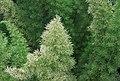 "Gradina Botanica ""Vasile Fati"" (4657261206).jpg"