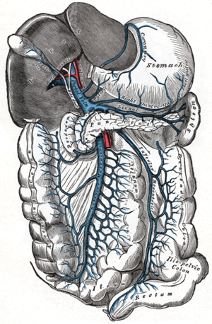 Portal vein - The portal vein and its tributaries.  It is formed by the superior mesenteric vein, inferior mesenteric vein, and splenic vein.  Lienal vein is an old term for splenic vein.