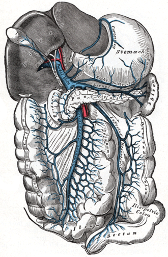 Superior mesenteric vein - The portal vein and its tributaries.  The superior mesenteric vein and splenic vein.  Lienal vein is an old term for splenic vein.  Anatomical position.