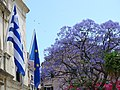Greek and EU Flags with Bougainvillea Tree - Old Town - Corfu - Greece (42259286161).jpg