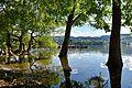 Greifensee in Niederuster - 'Baum unter' 2016-06-06 17-56-00.JPG