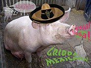 Grippa Mexicana